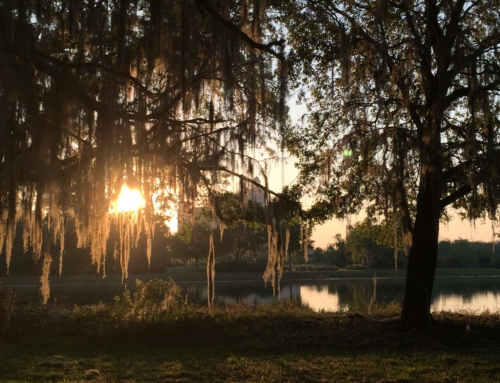 Eco Adventure Tour & Farm: The Ritz-Carlton Orlando, Grande Lakes