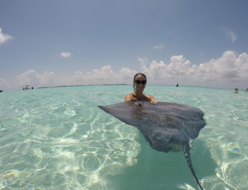 Stingray City Sandbar: A memorable stingray encounter in The Cayman Islands