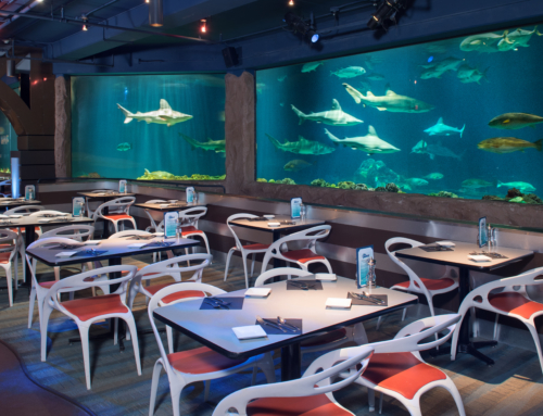 Dinner Alongside Sharks at SeaWorld Orlando – for a limited time park admission is not required