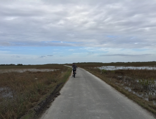 Shark Valley: Biking in the Everglades South Florida